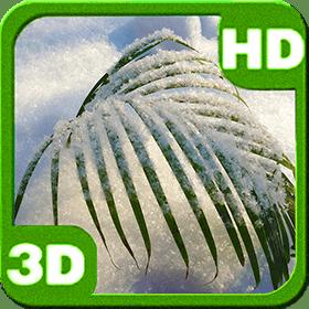 snowy-tender-palm-branch