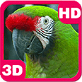 Amazing Bright Macaw Parrot Android Personalization 3D Live Wallpaper download from piedlove.com