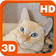 Awakened Cute Cat at Home Android Personalization 3D Live Wallpaper download from piedlove.com