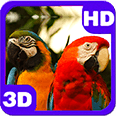 Beautiful Parrots Couple Android Personalization 3D Live Wallpaper download from piedlove.com