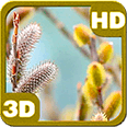Blooming Catkins Young Willow Deluxe HD Edition 3D Live Wallpaper for Android