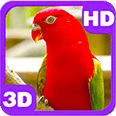 Cute Bright Red Parrot on Next Branch Android Personalization 3D Live Wallpaper download from piedlove.com
