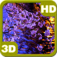 Kyoto Evening Blooming Sakura Deluxe HD Edition 3D Live Wallpaper for Android