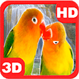 Lovebirds Parrots Waterfall Android Personalization 3D Live Wallpaper download from piedlove.com