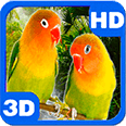 Parrots Agapornis Fischeri Android Personalization 3D Live Wallpaper download from piedlove.com