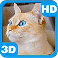 Purring Cute Domestic Cat with Amazingly Blue Eyes Android Personalization 3D Live Wallpaper download from piedlove.com