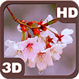 Rain Drizzles Cherry Branch Android Personalization 3D Live Wallpaper download from piedlove.com