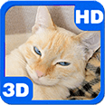 Slumbering Cat in Basket Deluxe HD Edition 3D Live Wallpaper