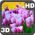 Springtime Tulips Carpet Deluxe HD Edition 3D Live Wallpaper for Android